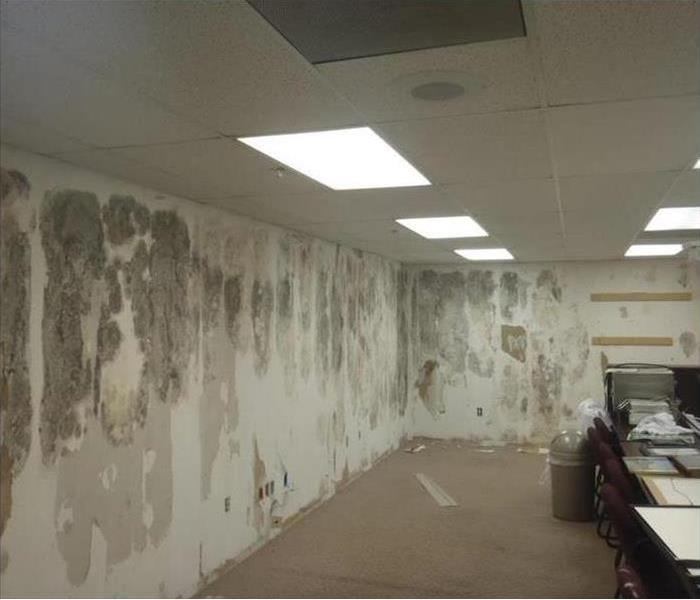Why SERVPRO Commercial Mold in Brunswick County